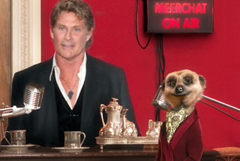 Meerchat...Aleksandr and The Hoff