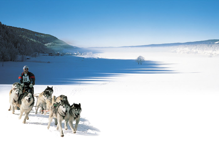 Husky-sledding, Switzerland