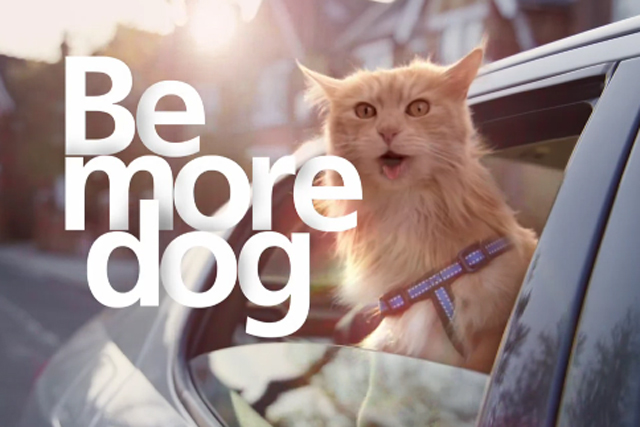 http://offlinehbpl.hbpl.co.uk/news/OKM/O2-Bemoredog-20130704110504121.jpg