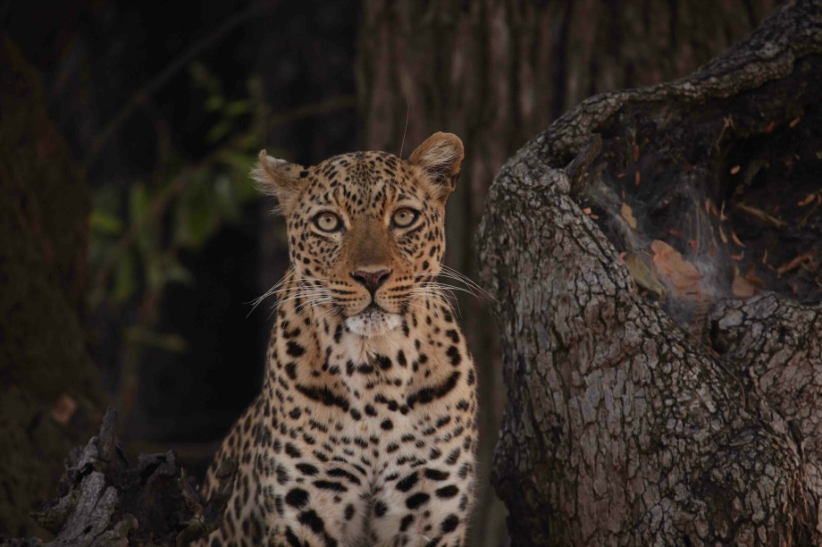 Love Nature to stage immersive wildlife exhibition