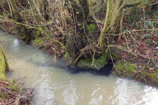 A stream polluted with digestate overflowing from landspreading
