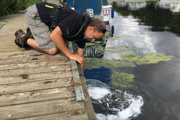 Fish restocking after OMEX Agriculture's pollution of the river Witham
